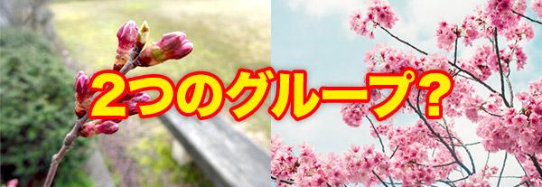 ここ花には2つの配信グループがある