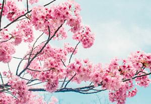 桜グループに入会するとサインツール画面が見放題